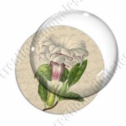 Image digitale - Grosse fleur blanche