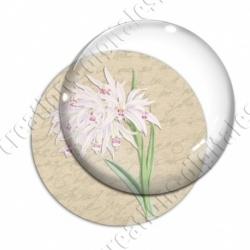 Image digitale - Fleurs blanches et roses
