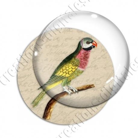 Image digitale - Oiseau
