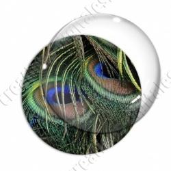 Image digitale - Plume de paon 12