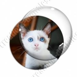 Image digitale - Chaton blanc aux yeux bleus