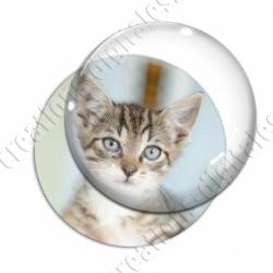 Image digitale - Chaton tigré