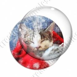 Image digitale - Chat endormi 02