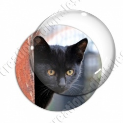 Image digitale - Chaton noir aux yeux marrons