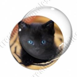 Image digitale - Chaton noir aux yeux bleus