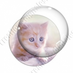 Image digitale - Chaton roux aux yeux bleus