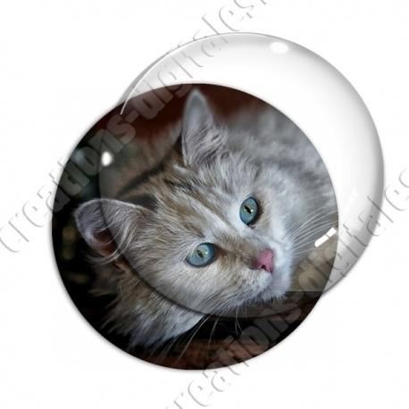 Image digitale - Chaton gris aux yeux bleus