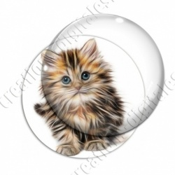 Image digitale - Chaton