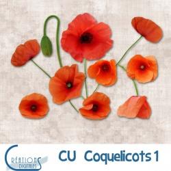 CU Coquelicots 01