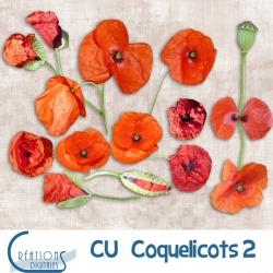 CU Coquelicots 02